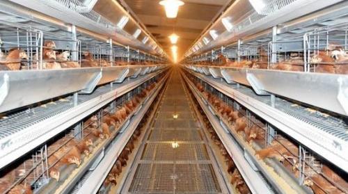 家禽饲养的消毒卫生