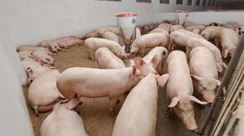 """""""非洲猪瘟""""规模猪场如何防疫?快行动起来"""
