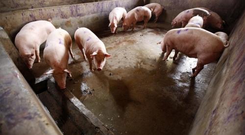 猪粪处理的基本方法
