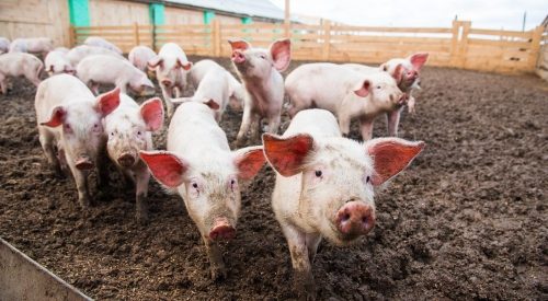 大型养猪场粪便怎么处理