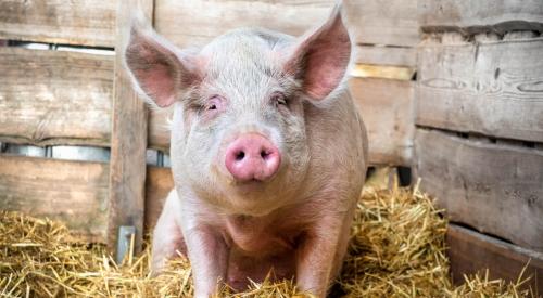 养猪场猪粪自动处理