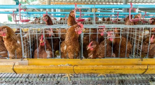 养鸡场需要的设备指南