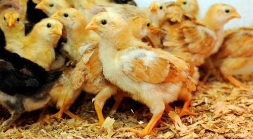 湿鸡粪无害化处理的方法,鸡粪无害化处理的办法!