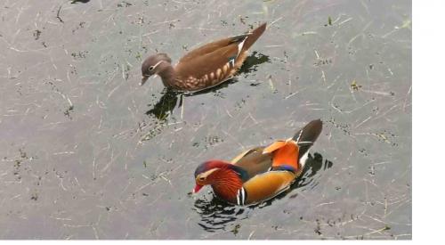 环保日益严格,鸭粪怎么处理